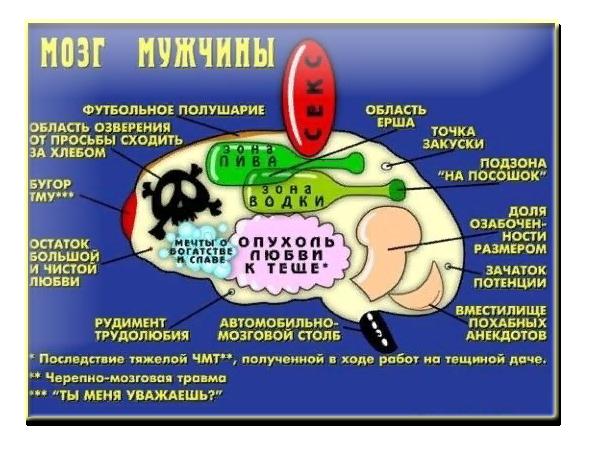 заголовки для мозга мужчины